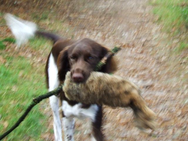 puppies bijten afleren